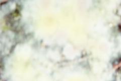 polaroid4b